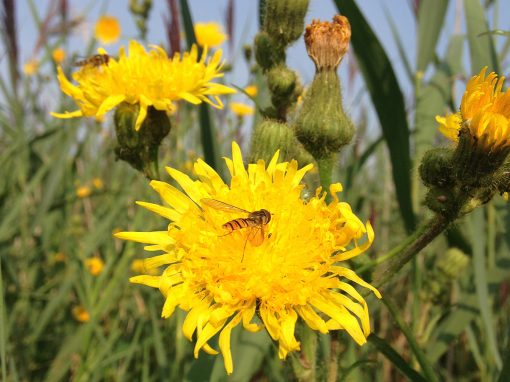 The Pollinator Project