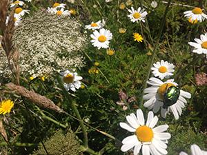 Biodiversity Action Plans